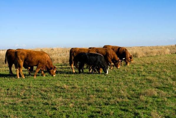 ագրոտեխլիզինգ անասնապահական եվ գյուղատնտեսական ընկերություն животноводческая и сельскохозяйственная компания агротехлизинг agrotechleasing livestock farming amp agricultural company