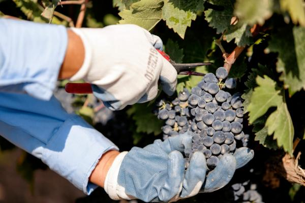 կարաս վայնս գինու արտադրամաս винзавод карас вайнс karas wines winery